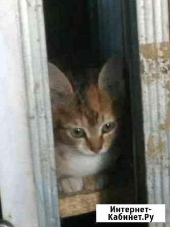 Котята в хорошие руки Улан-Удэ