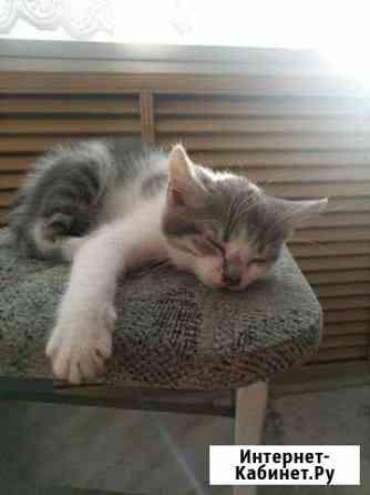 Отдам котёнка Горно-Алтайск