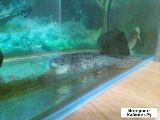 Продам тритонов с аквариумом Новосибирск