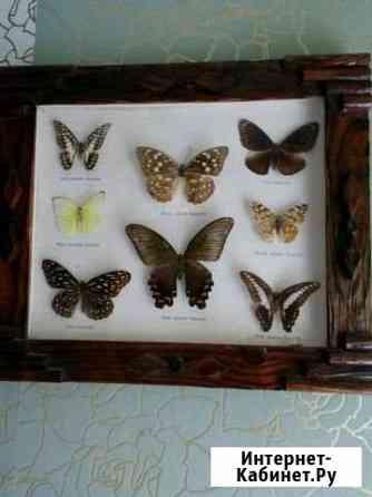 Бабочки, коллекция Магадан