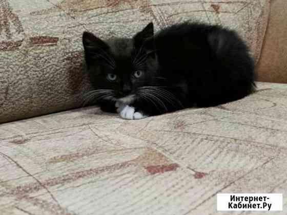 Отдам котенка в добрые руки Петропавловск-Камчатский