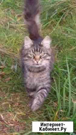 Котику ищем хозяев Великий Новгород