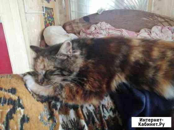 Кошка Елизово