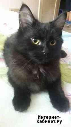 Продам котенка от сибирской кошки Владивосток