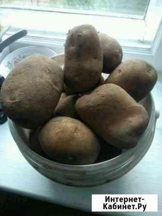 Продам картофель Великий Новгород