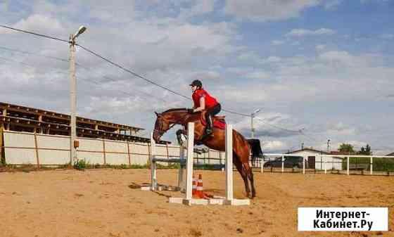 Конный спорт Горбунки
