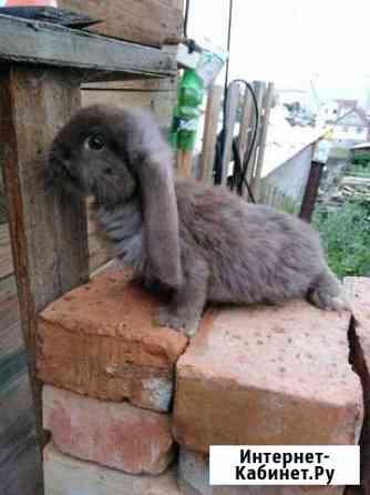 Кролики Улан-Удэ
