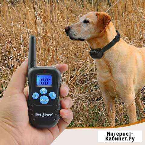 Электронный ошейник для собак Владивосток