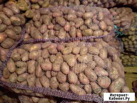 Картошка оптом от 1 мешка Братск