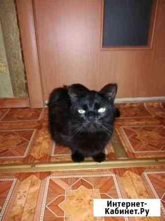 Отдам кота Сосногорск