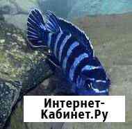 Рыба Братск