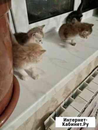 Котята от умной кошки Абакан