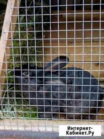 Продам кроликов Ижевск