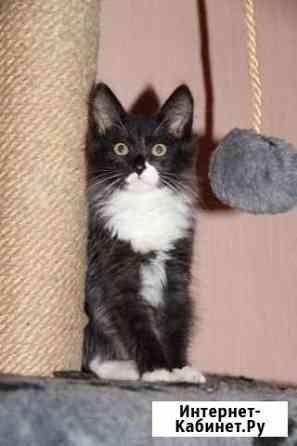 Очаровательный котик ждёт семью Братск