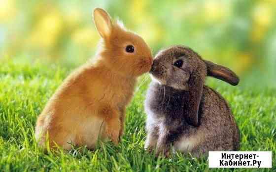 Кролики на мясо Голицыно