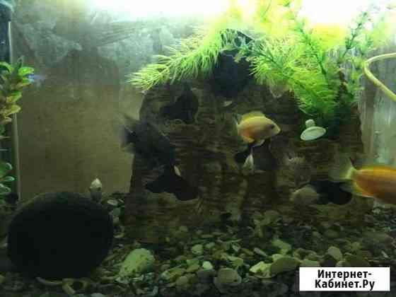 Рыбки Великий Новгород