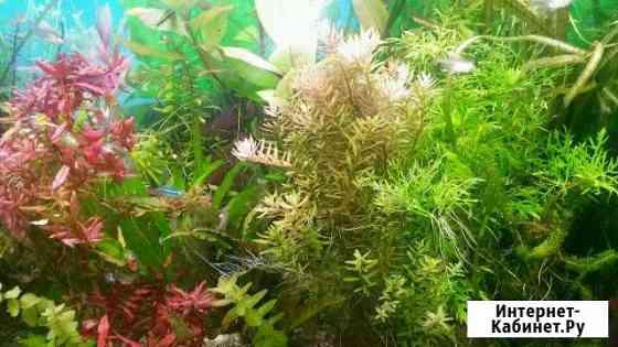 Аквариумные растения Железнодорожный