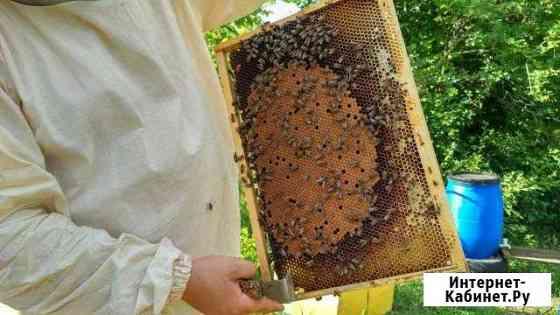 Пчеломатки Белгород