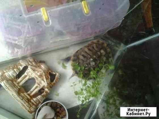 Черепаха Петропавловск-Камчатский