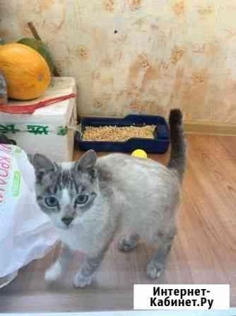 Кошечка тайская Уссурийск