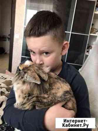 Отдадим кролика с клеткой в заботливые и добрые ру Боровичи