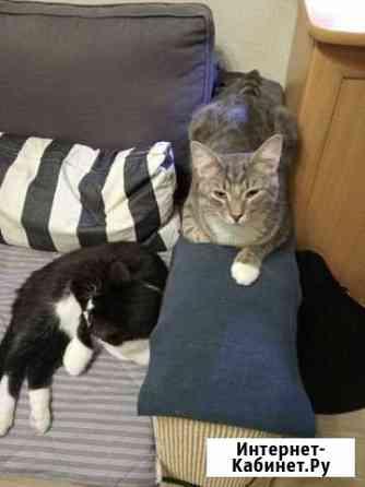 Котята ищут дом Великий Новгород