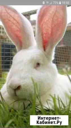 Кролики Белгород