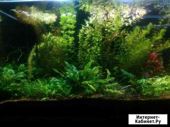 Аквариумные растения Муравленко