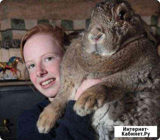 Кролики фландеры Цена за 4 месячного Кролика Бея