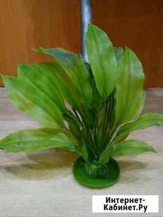 Растения искусственные Мурманск