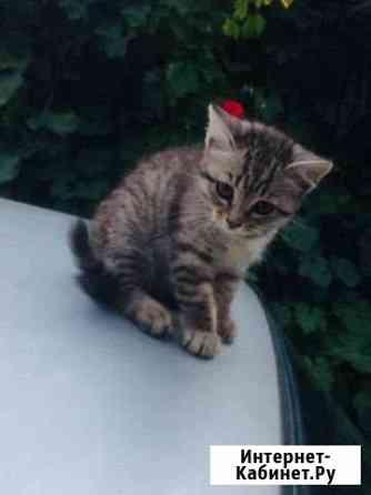 Отдам котёнка в хорошие руки Черкесск