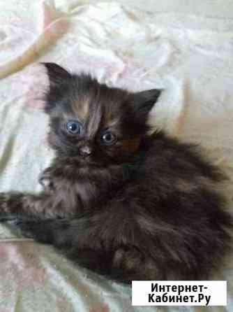 Котенок, девочка. Родилась 16 сентября Сыктывкар