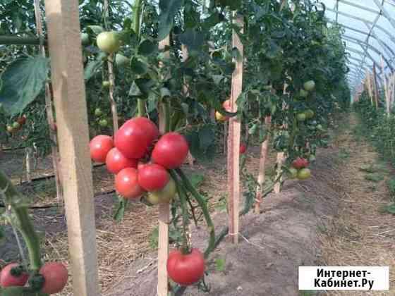 Готовое фермерское хозяйство Семибратово