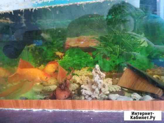 Аквариум с рыбами Иркутск
