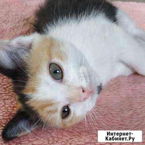 Котёнок Набережные Челны