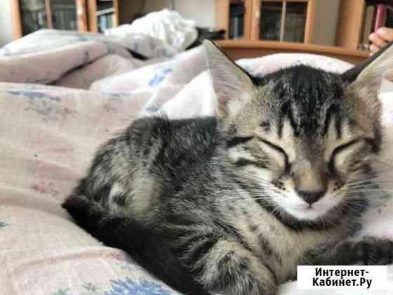 Котёнок Бенгал Джина Екатеринбург