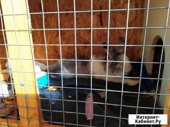 Продам кролика Ульяновск