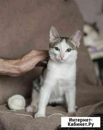 Котенок в добрые руки Березовский