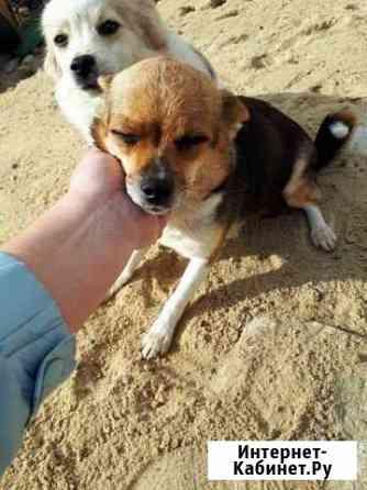 Бесплатно даром щенки,в добрые руки Волгоград