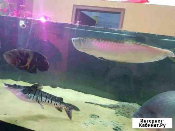 Продаю аквариумный комплекс на 1500 литров Коркино