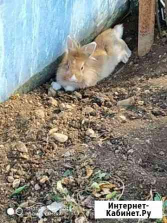 Дикоративный кролик Симферополь