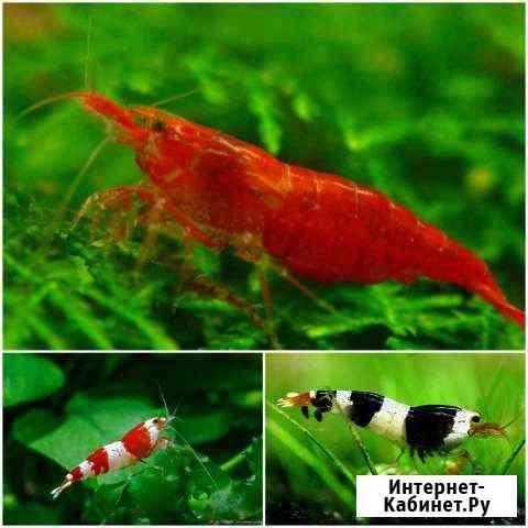 Креветки, Рыбки Домодедово