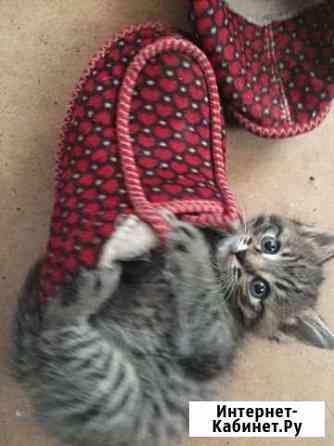 Котята ищут дом Пенза