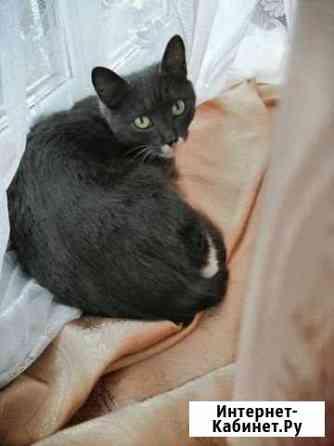 Кошка Тиля Тюмень