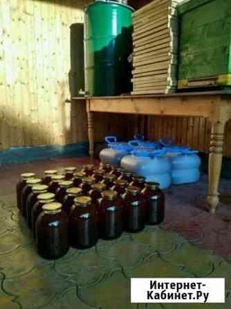 Чистый горнолиповый мёд Назрань