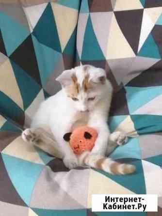 Бездомный котенок бесплатно Майкоп