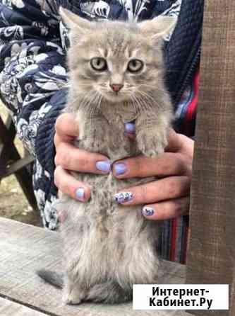 Отдаём котят,возможна доставка Иволгинск