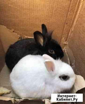 Кролики бесплатно Краснодар