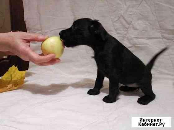 Продать щенка Великий Новгород