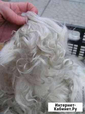 Продам козий белый пух Онгудай